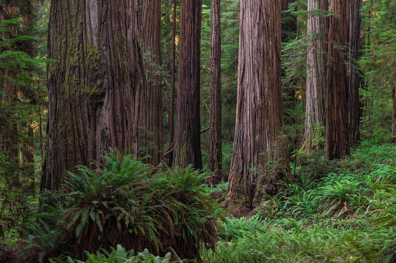 Rewoods National Park (2020-08-19)