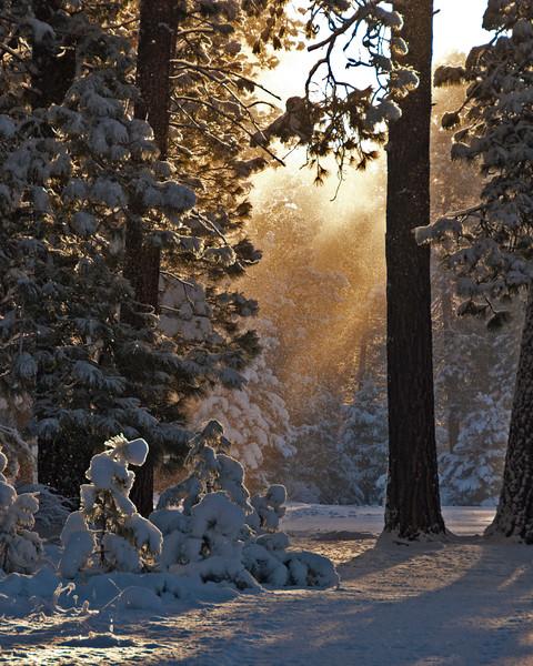 Morning SnowMist_DSC0558.jpg