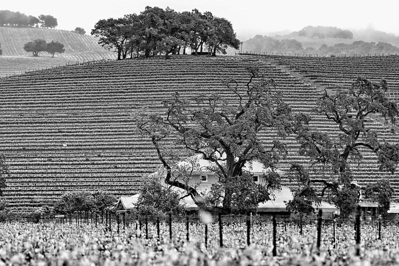 Mendocino County CA 2015