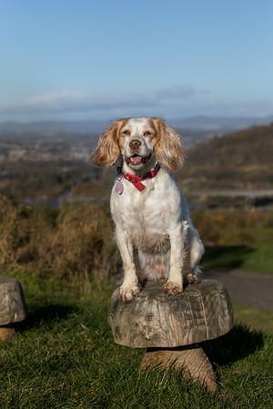 Lola & Gracie - Pet photography Scotland