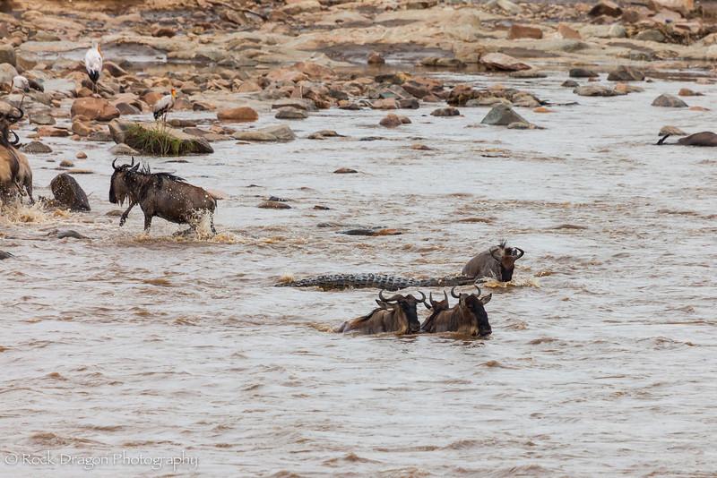 North_Serengeti-48.jpg