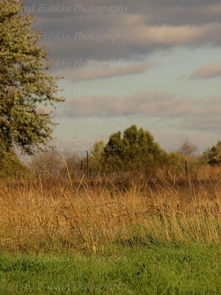 grass clouds.jpg