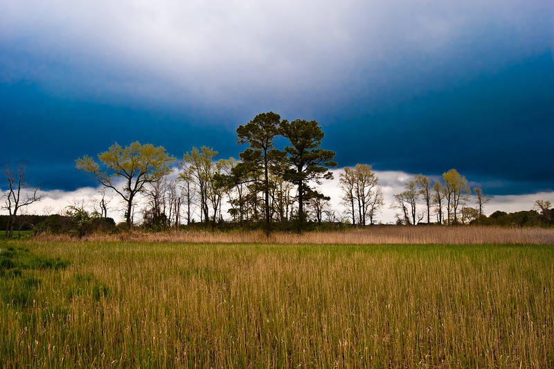 SHARP GRASS AND LOW CLOUDS