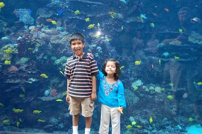 04-2008 Georgia Aquarium