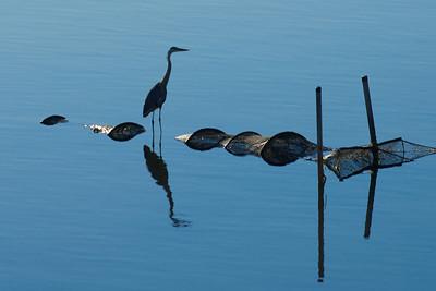Birds of summer 2010