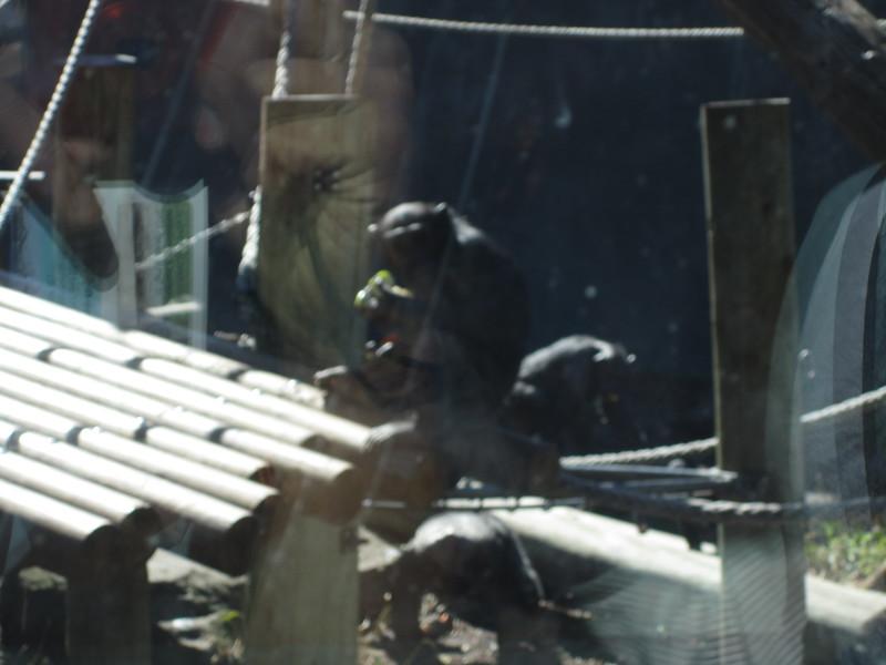 Sydney - Sydeny Zoo-32.JPG