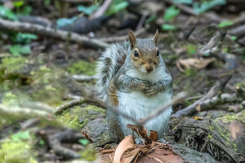 Squirrel R Frome 8404.jpg