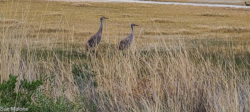 05-19-2021 Summer Lake Wildlife Refuge-11.jpg