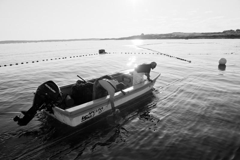 49. Tending a weir, off Cape Elizabeth, Maine June 2013.
