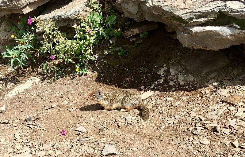 Ground squirrels know we have food