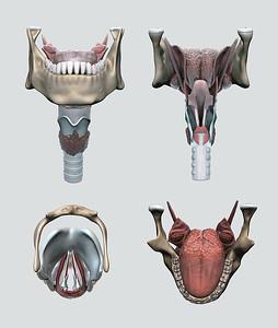 Medical Illustration - Rebecca Symonds