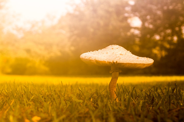 2016-08-26 Mushrooms at Mikes