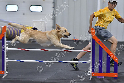SCAT CPE Agility Trial, July 8-9, 2017