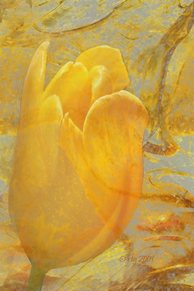 FlowerArt_Tulip_Yellow_0532.jpg