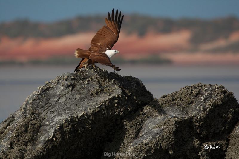 broome eagle a bhp.jpg