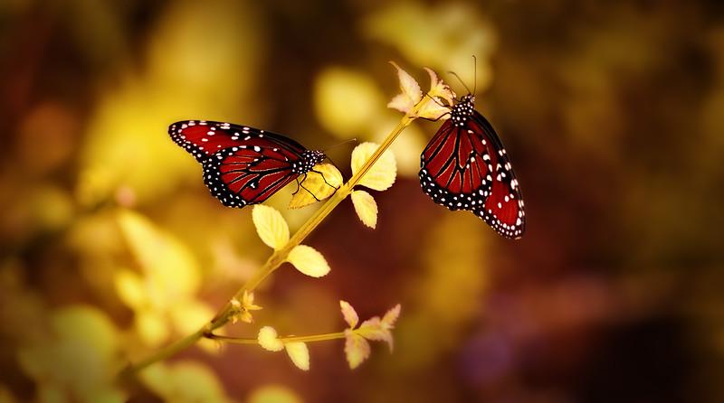 Butterfly-108.jpg