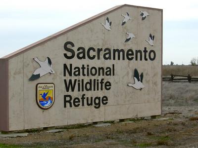 Sacramento NWR 11-07