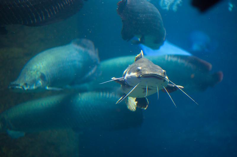 2014 10 25 Dallas World Aquarium-38.jpg