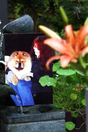 Sandra's Garden 2013