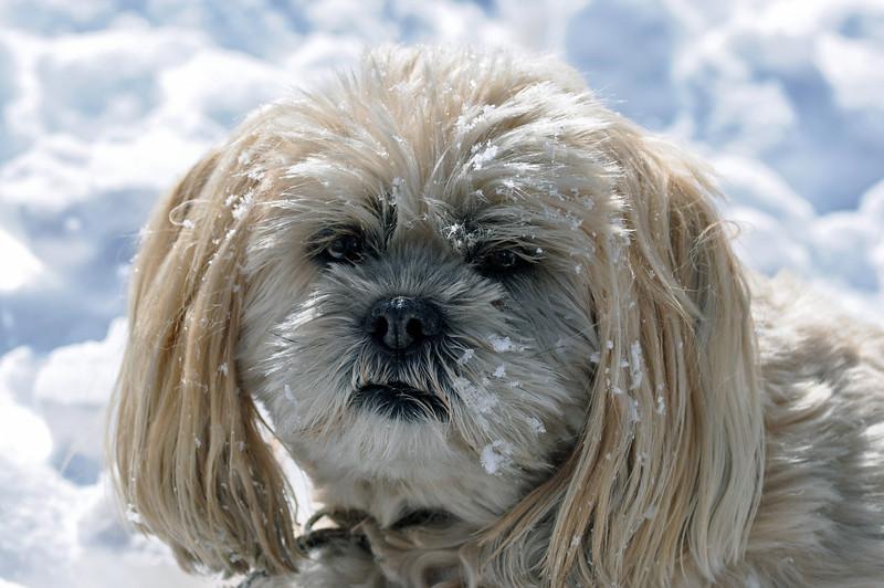 Snowy Face.jpg