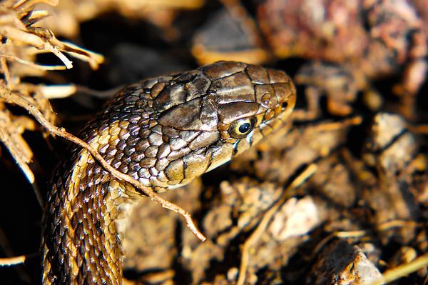 Lizards, Snakes, Snails, Alligators