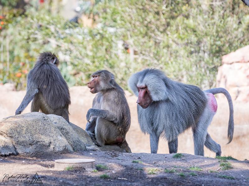 San Diego Zoo and Safari Park-097.jpg