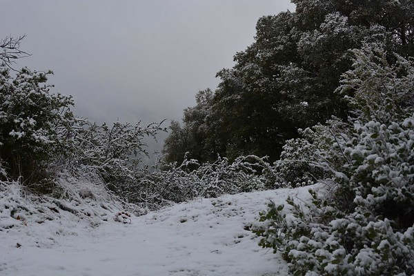Santa Clara County Snow
