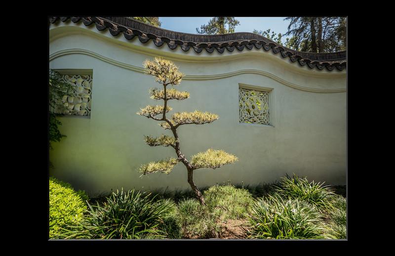 11-wavy tree.jpg
