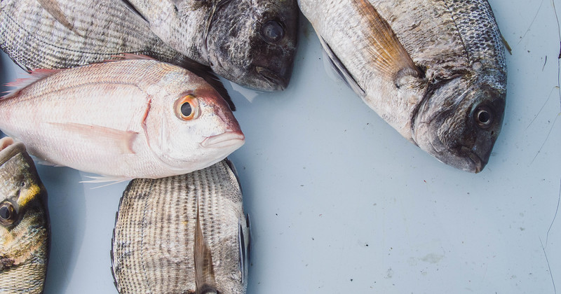 marseille fish market fb.jpg
