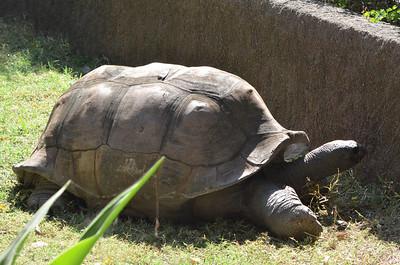 Nehru Zoological Park - Hyderabad Zoo - Part 3
