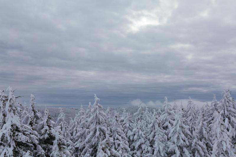 2020-02-01_SN_KS_Frosty Trees-0826.jpg