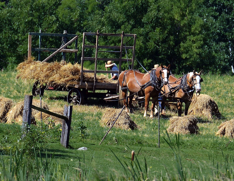 04 CLOSE UP-AMISH-Roper  _9220.jpg
