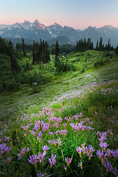 asters and tatoosh retouched.jpg