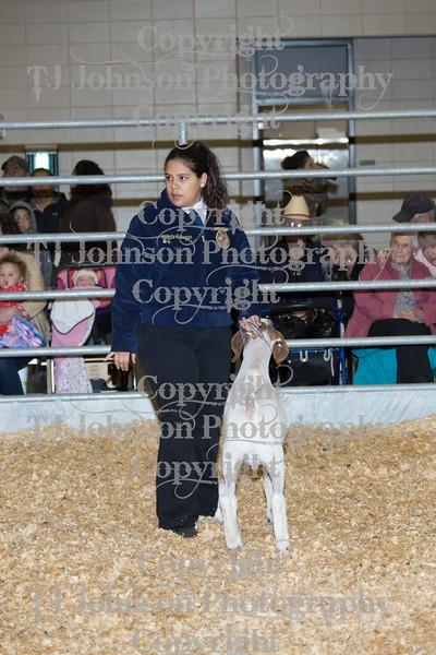 2016 KISD Goat Show Class 2