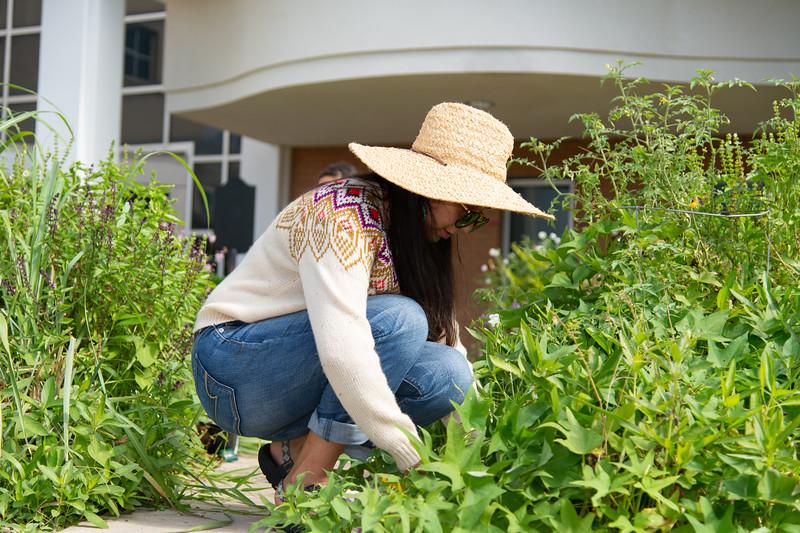 Sofia Gonzalez removes the weeds from the Islander ECDC garden.