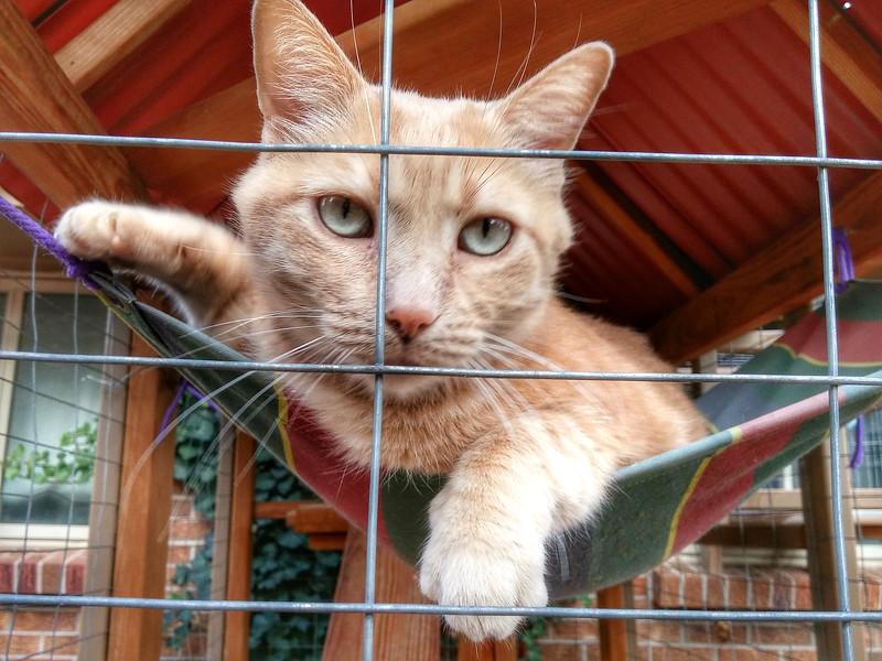 Erin animals (17).jpg