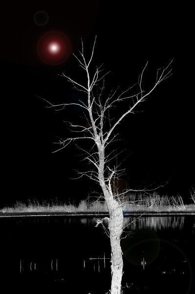 DSC_6024  lone tree copy.jpg