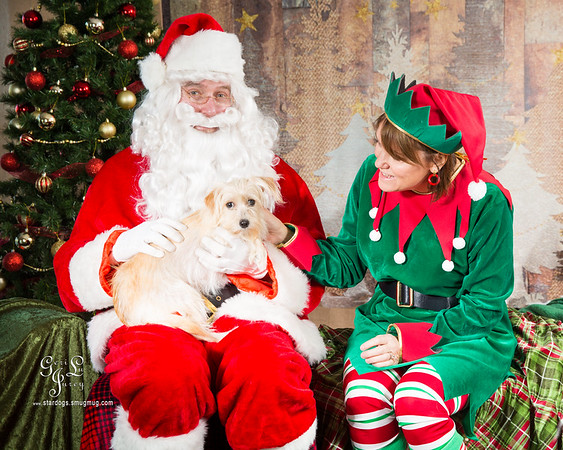 Santa and Adoptable Dogs