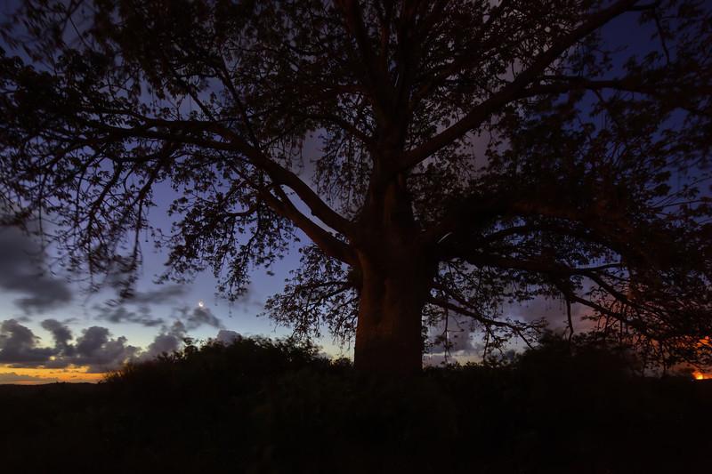 Sunset Baoba2 0203-HDR(6).jpg