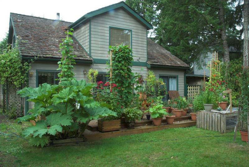 backyard, deck