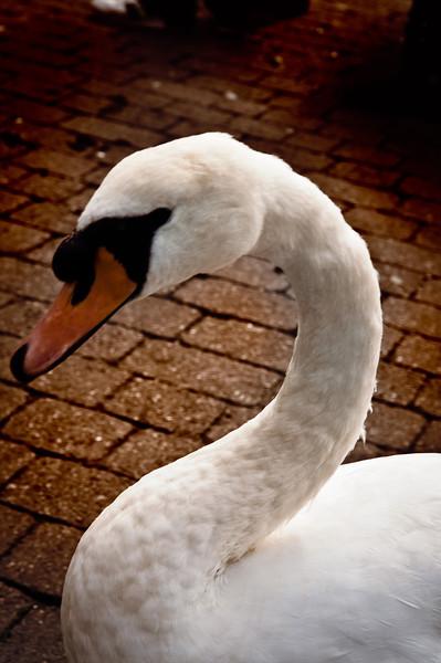 Windermere-20110906-092-Edit