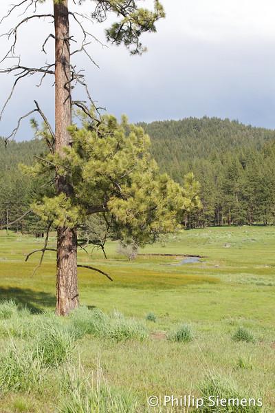Ochoco Creek and meadow