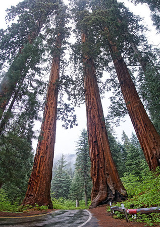 Sequoia National Park - May 2014