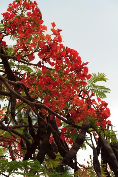 2012_06_10 Waikoloa HI 006.jpg