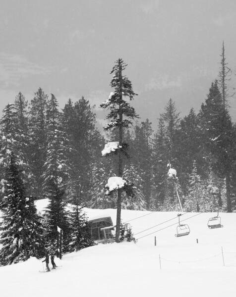 whistler pines 1.jpg