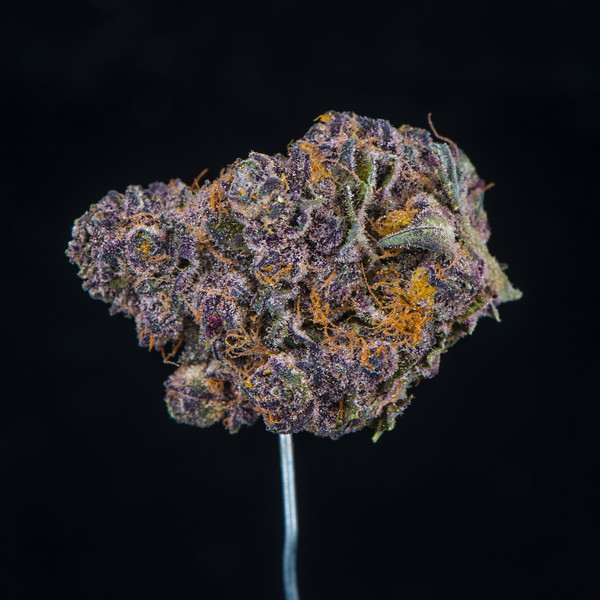 Tropicana Cookies - Redbud Roots3.jpg