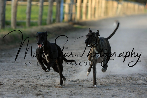 Hazelwood Lodge Whippet Races