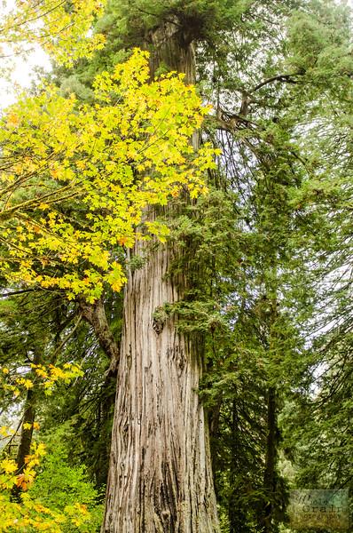 20141015_Redwoods_0074.jpg