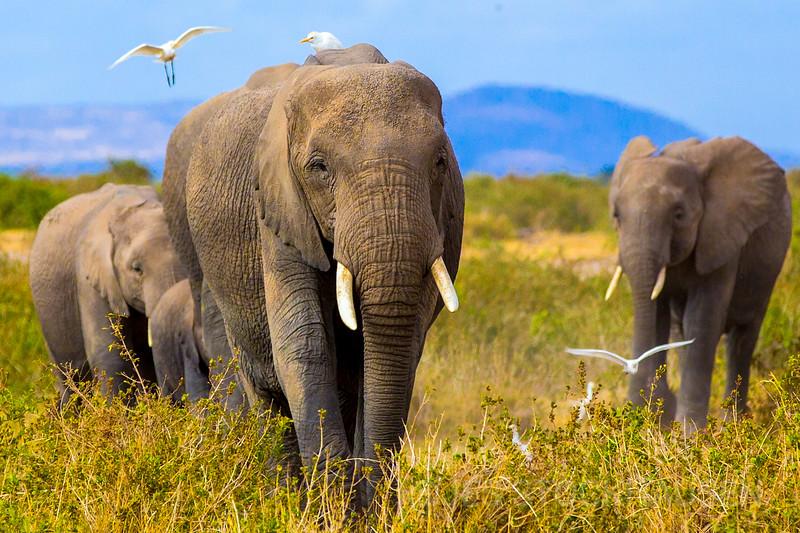 The Herd, Kenya