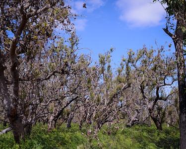 Trees & Vegetation - Pine Ridge Conservation Park, Gold Coast, Australia. Photos by Des Thureson